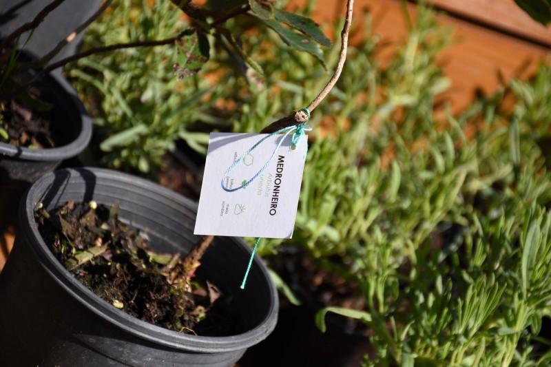 Famalicão oferece mais quatro mil árvores para adoção