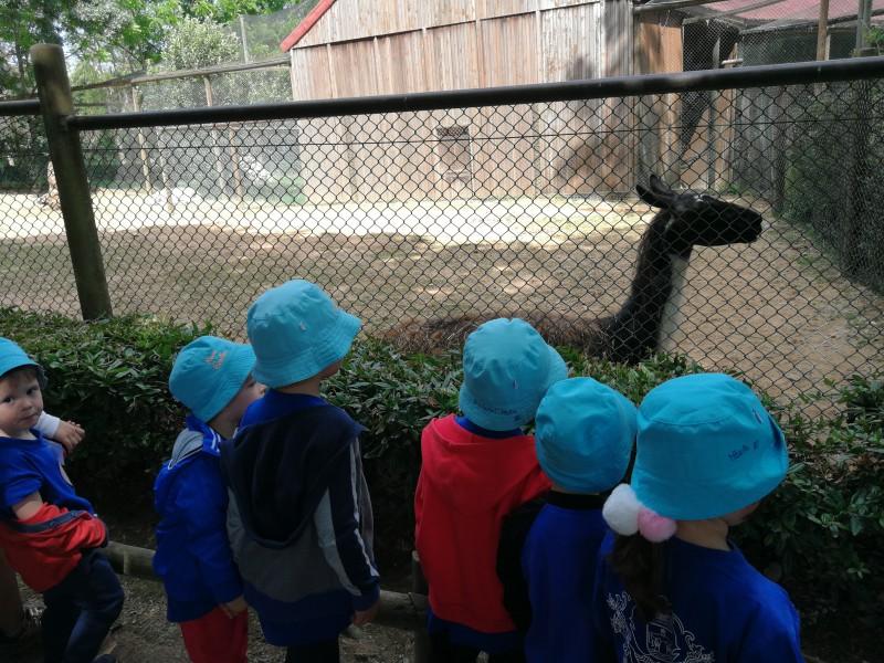 Infantário da Santa Casa de Vila Verde visita zoo de Santo Inácio