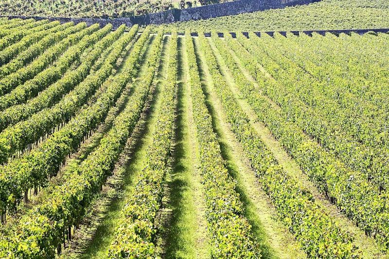 Nove quintas de portas abertas  na Rota dos Vinhos Verdes