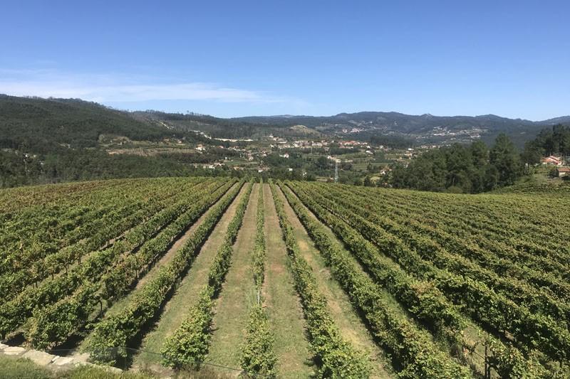 Vinhos Verdes de portas abertas