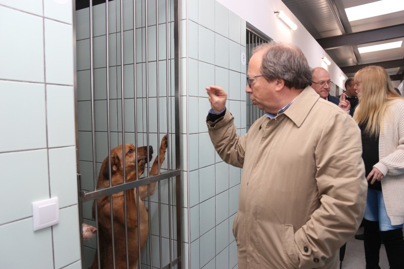 Município de Fafe aposta na protecção animal com ampliação do canil