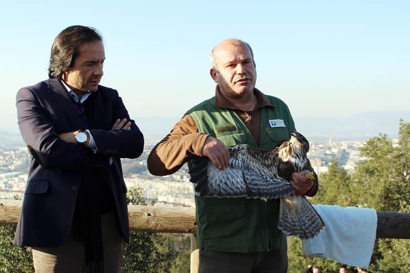 Município quer transformar o Monte do Picoto numa área de animais selvagens