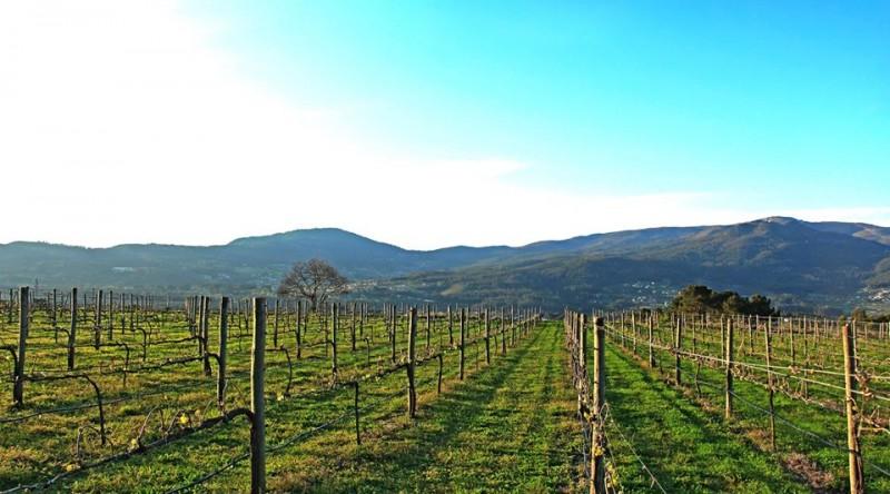 Sector do Vinho Verde adapta-se para poder brindar de novo