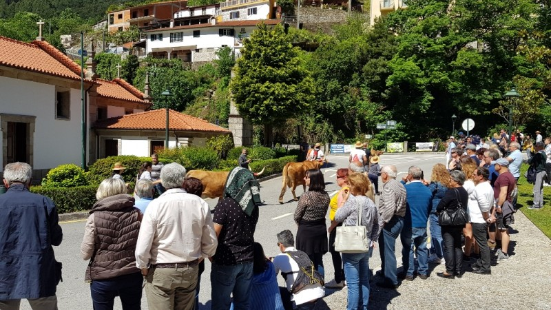 Terras de Bouro prepara a inscrição da Subida da Vezeira no Inventário do Património Cultural Imaterial