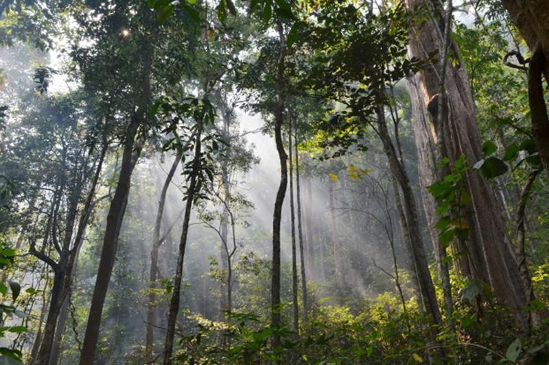 Jovens vigilantes abraçam natureza no EcoVoluntariado do Vez