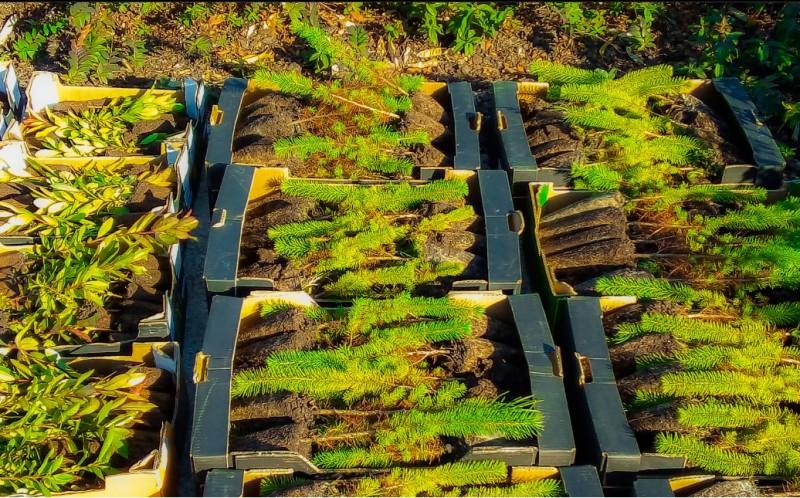Esposende recebe mais 2000 árvores autóctones para reflorestação