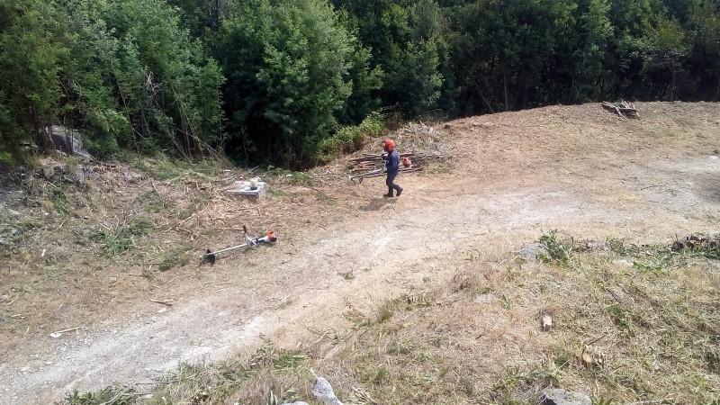 Caminha: sapadores florestais em trabalho intenso na defesa das floresta