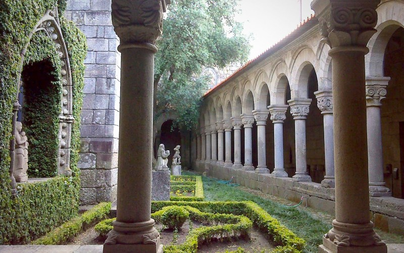 ICNF declara oliveira do claustro como Árvore de Interesse Público