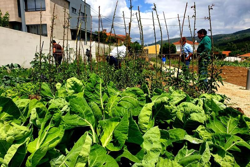 Junta de Gualtar avança com mais hortas urbanas