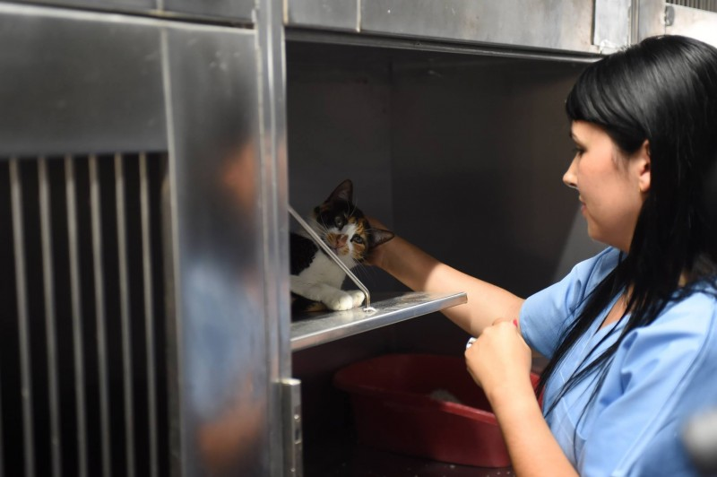 Protocolo de medicina veterinário alargado a novo centro