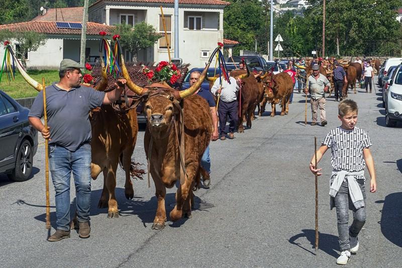 Tradição continua rainha na Festa das Colheitas