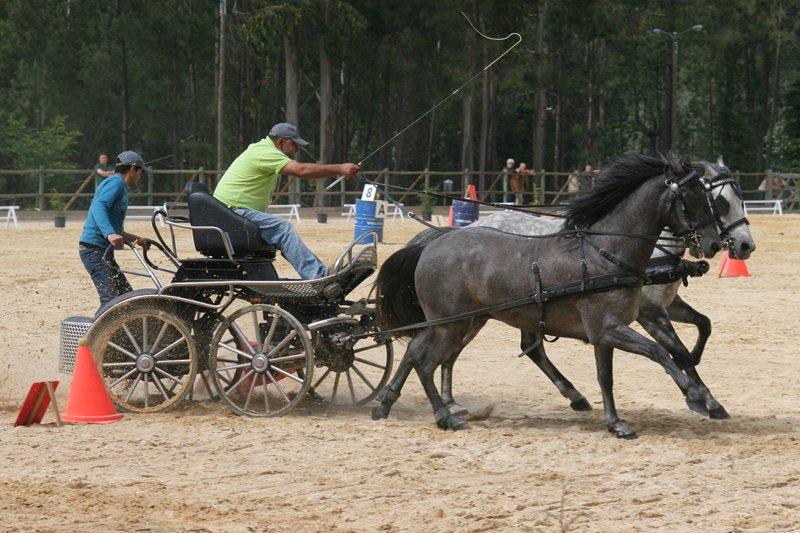 Cabeceiras de Basto: Cavalo potencia desenvolvimento