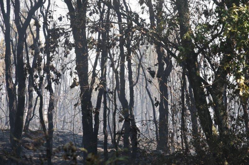 Braga é o segundo distrito  do país em número de incêndios