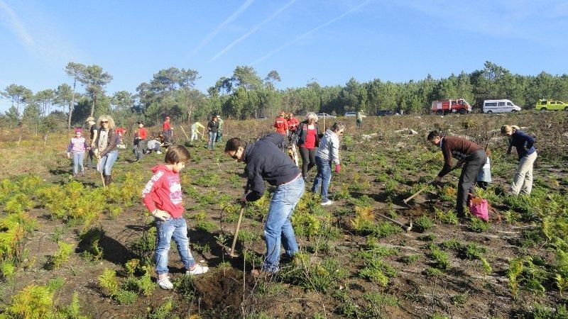 Esposende: Voluntários realizaram acção de reflorestação no Monte da Senhora da Guia
