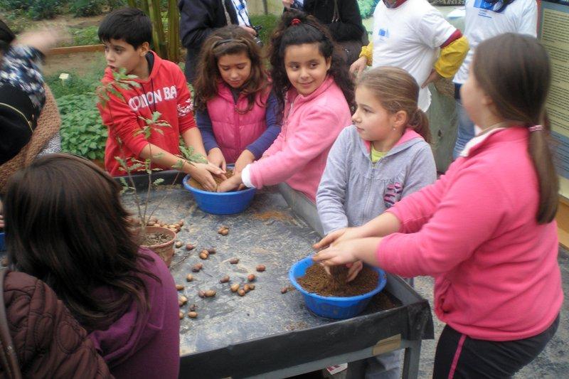 Crianças praticam novo método de plantação